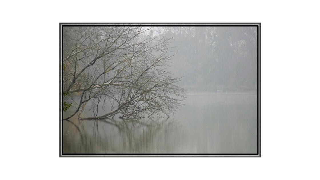 Squelette en branches dans la brume