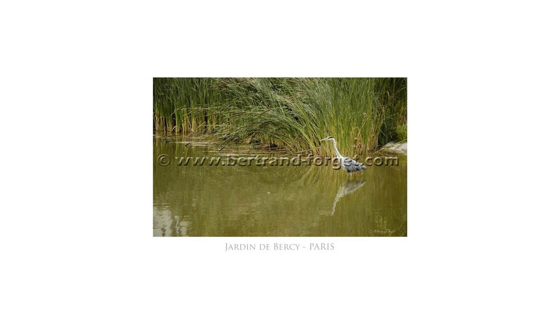 Le Héron dans les jardins de Bercy