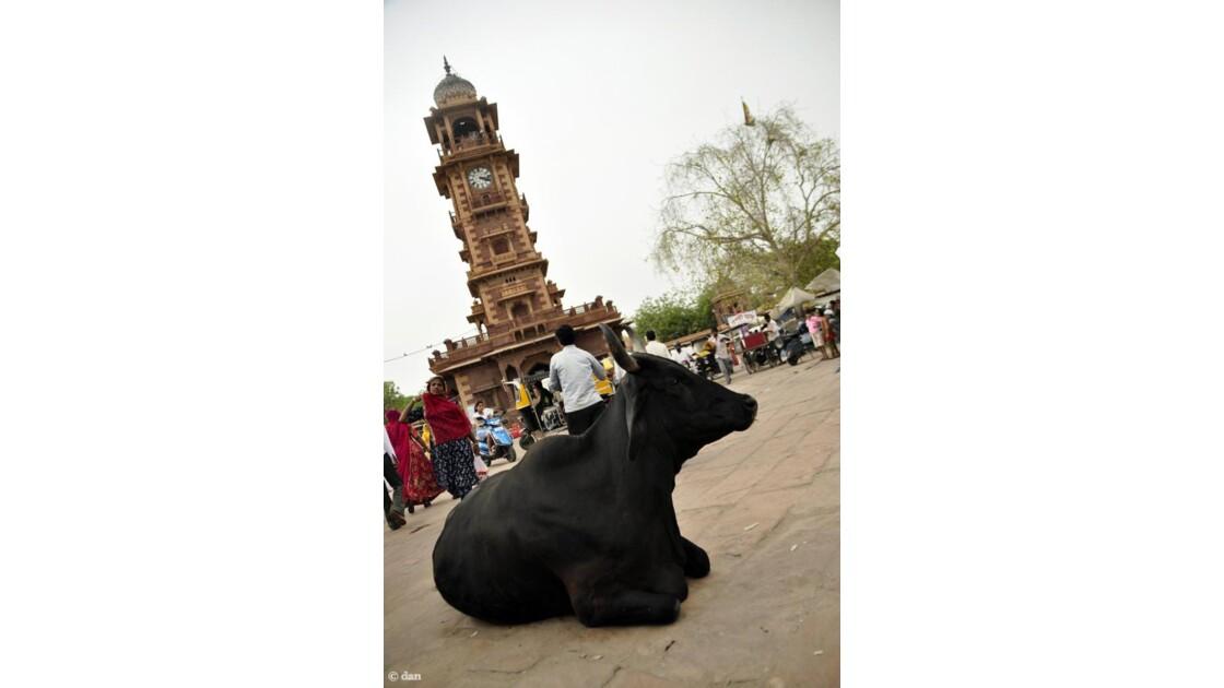 Vache sur la place de Jodhpur