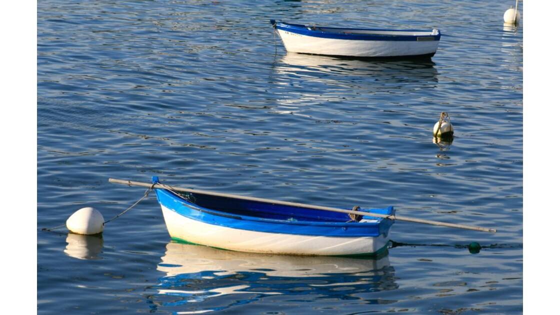 blanc-bleu breton