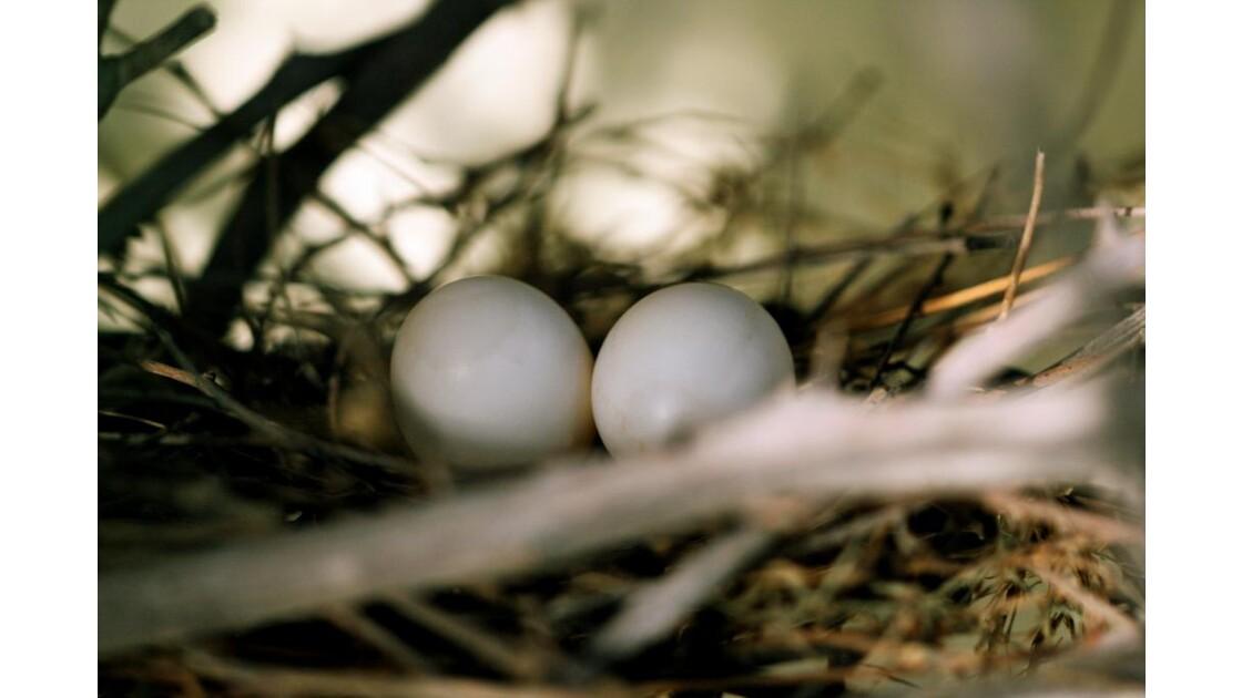 happy nest.JPG