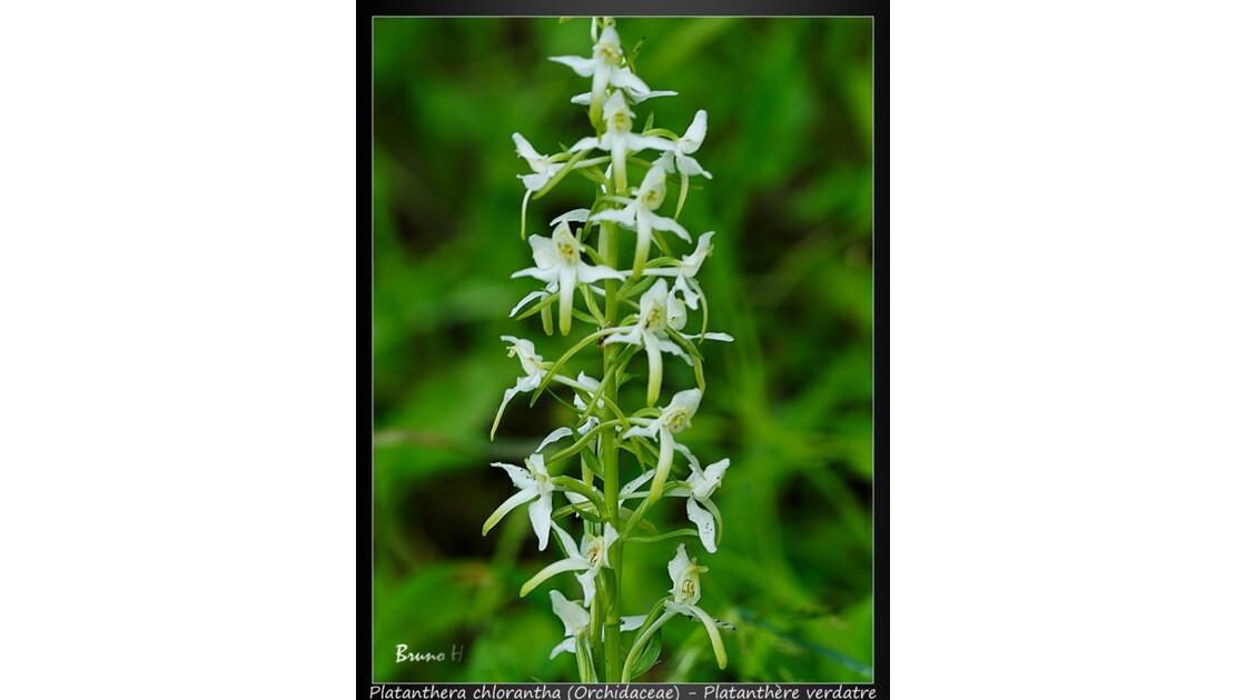 Orchidée sauvage 2