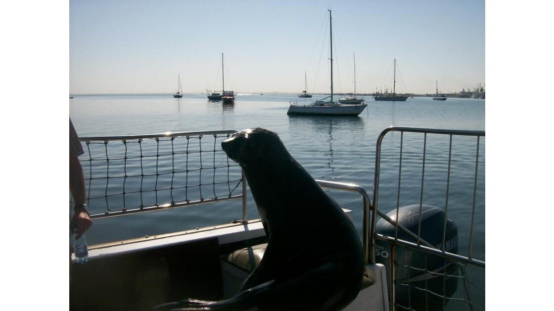 croisière à walvis bay.jpg
