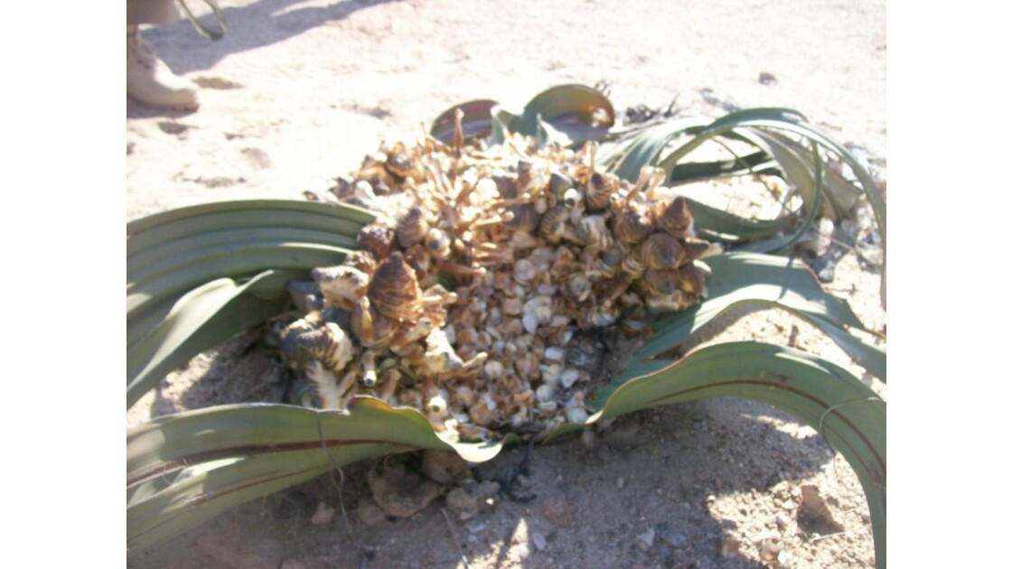 namibie2008_1280.jpg