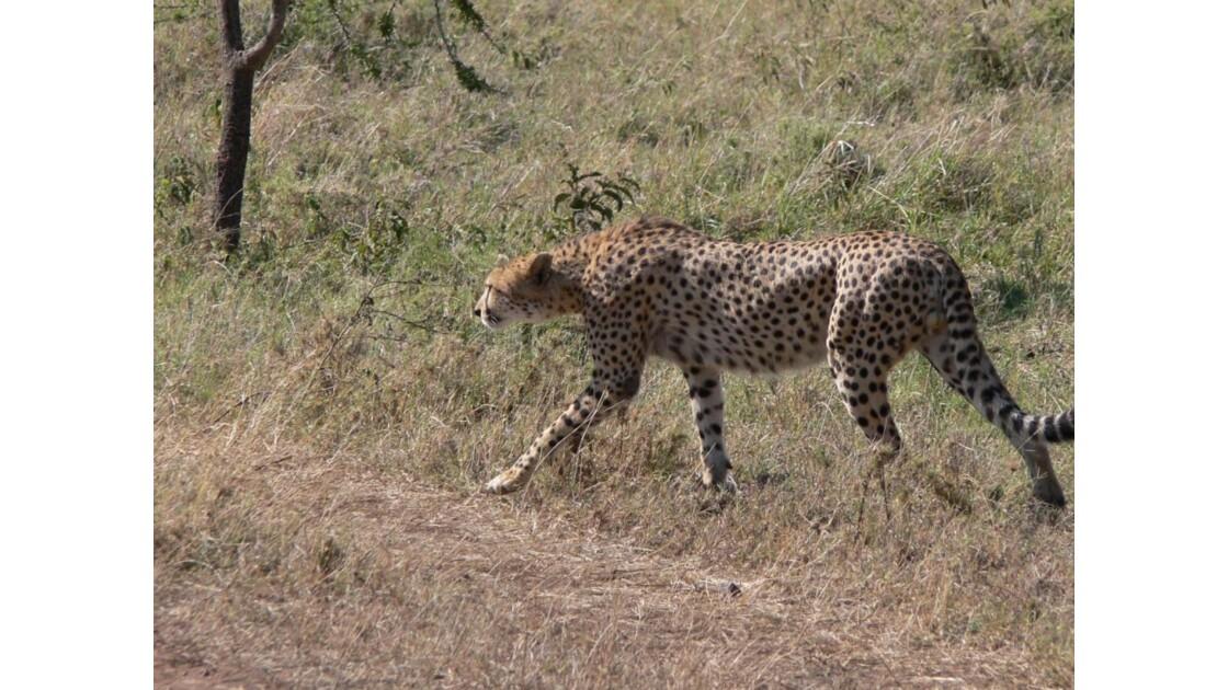 safari_tanzanie10.jpg