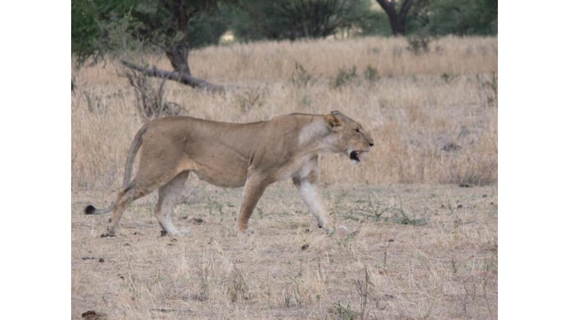 safari_tanzanie5.jpg