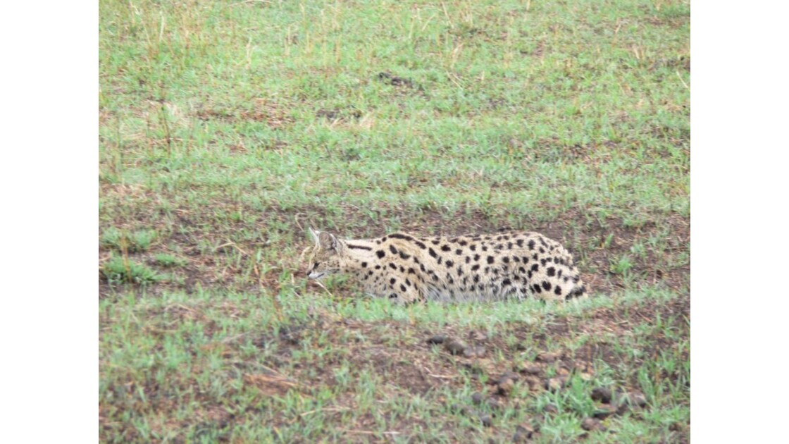 safari_tanzanie6.jpg