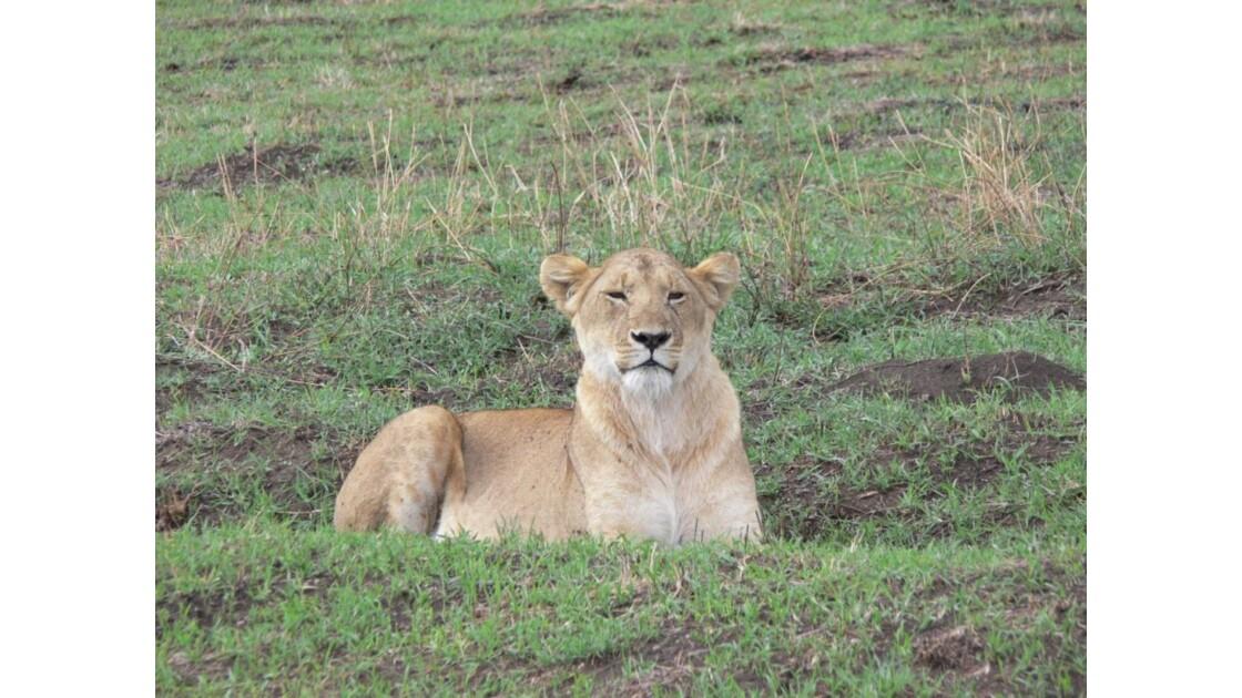 safari_tanzanie7.jpg