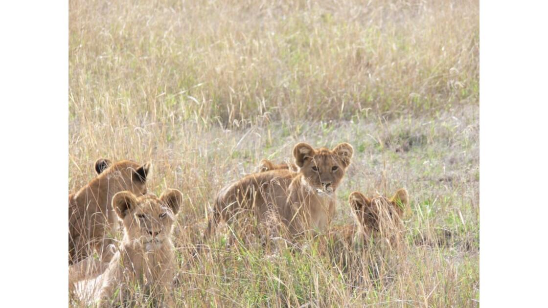 safari_tanzanie8.jpg