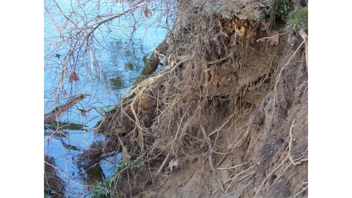 racines à nu