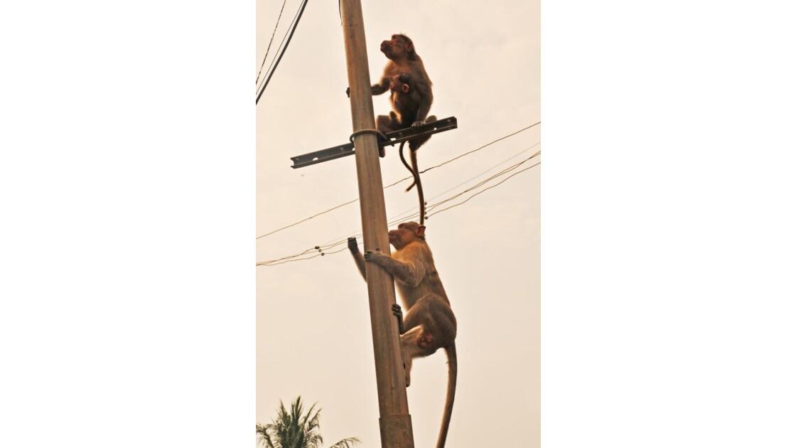 les électriciens ont oublié leurs outils