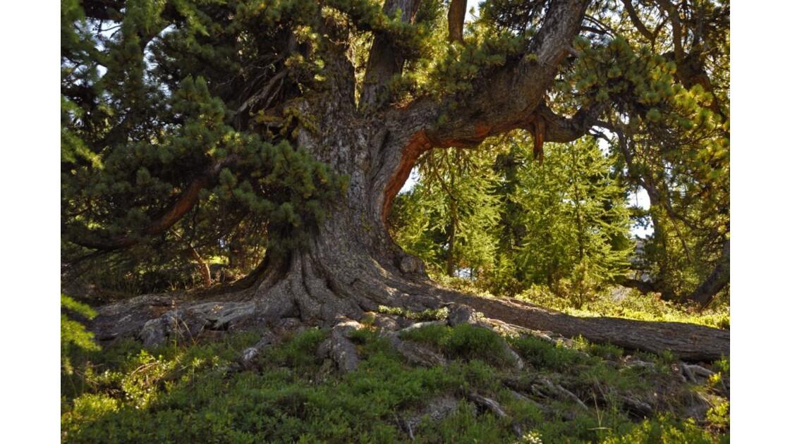 des racines impressionnantes !