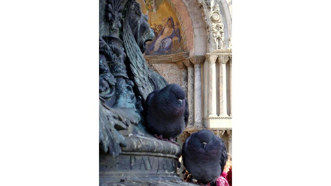 Pigeons vénitiens