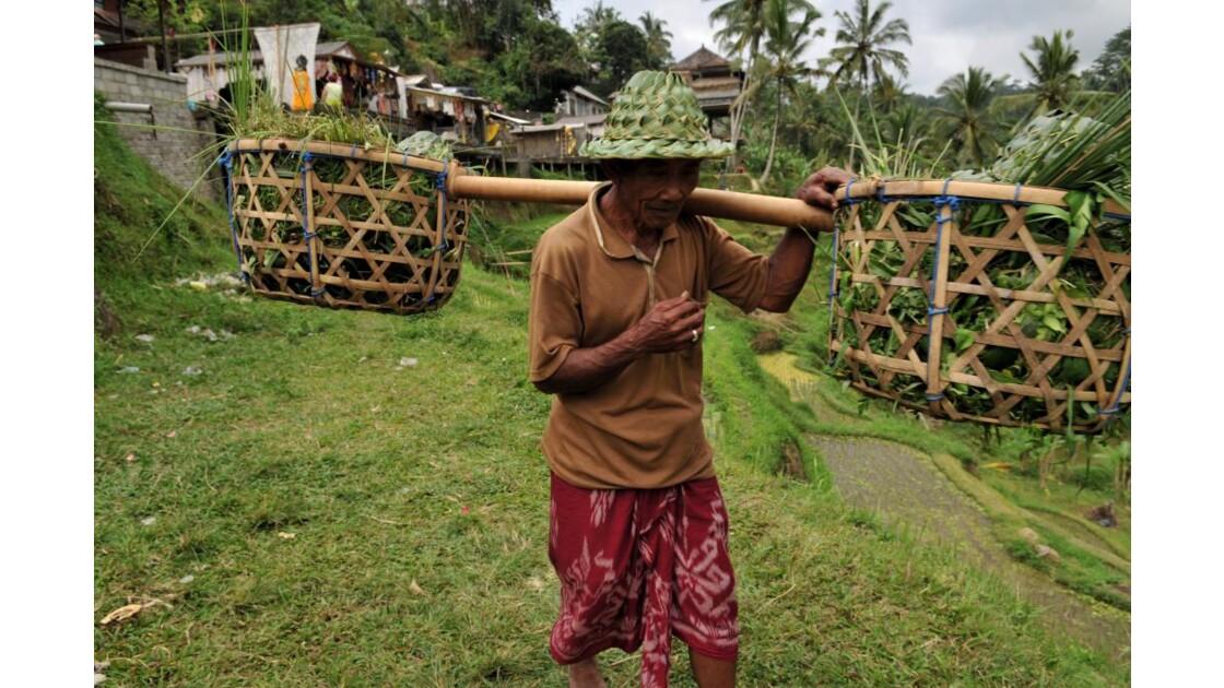 Paysan Riziere Bali