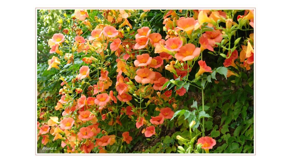 Fleurs sur vieux mur
