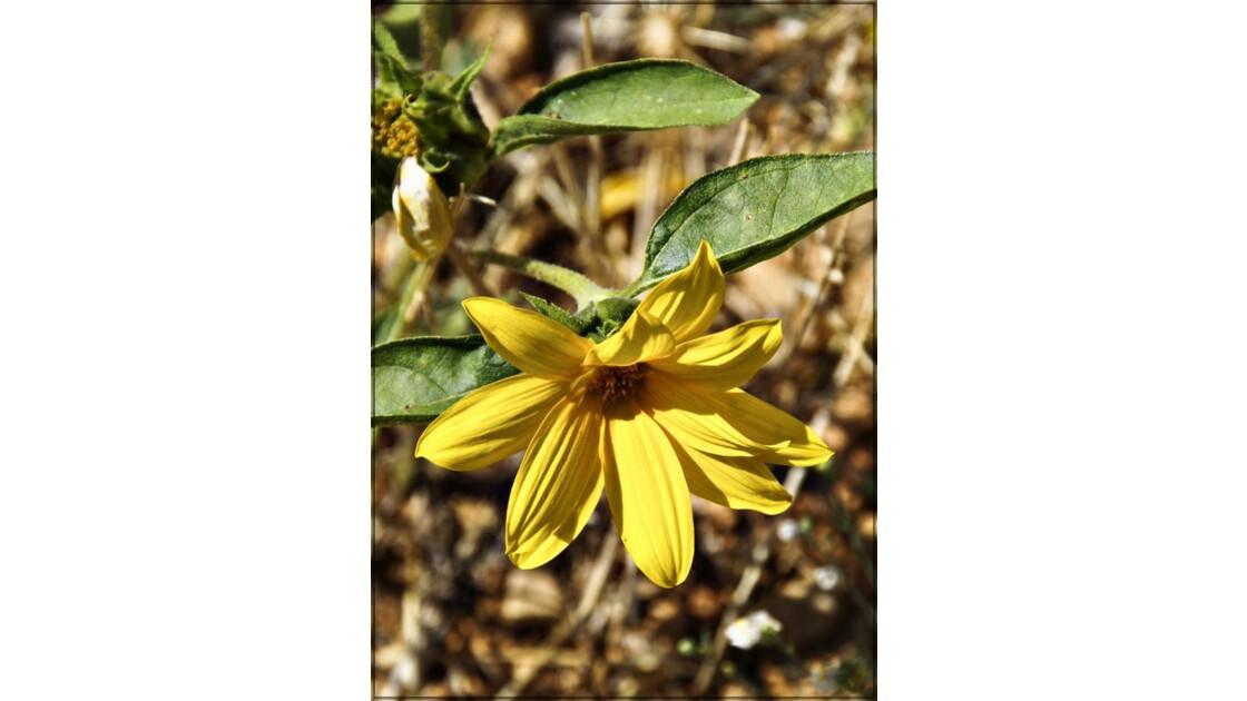 La fleur jaune !