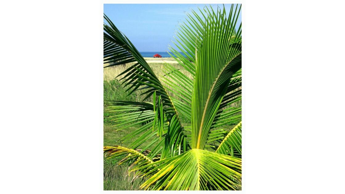 CUBA côtes près de Matanzas (oct 07)