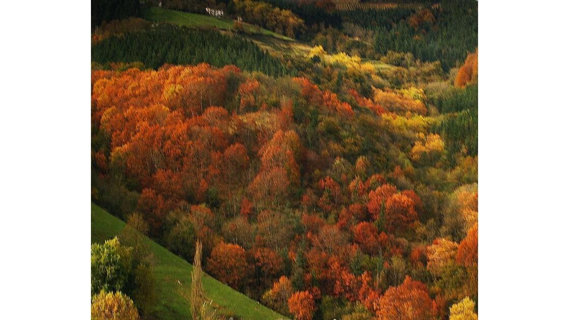Merveilles d'automne