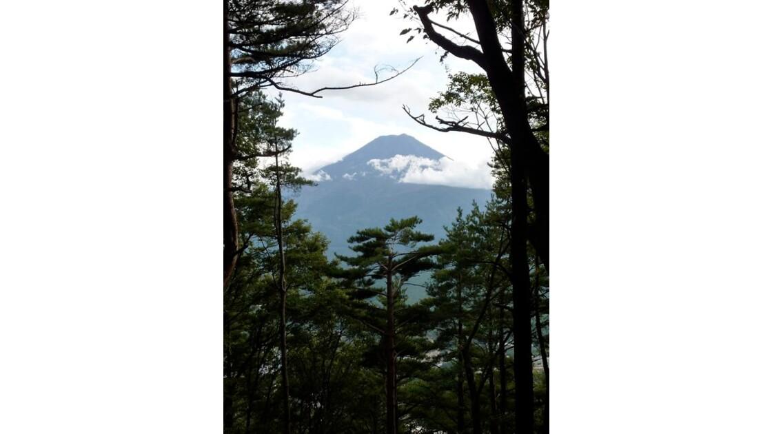 Fuji-san dans la forêt