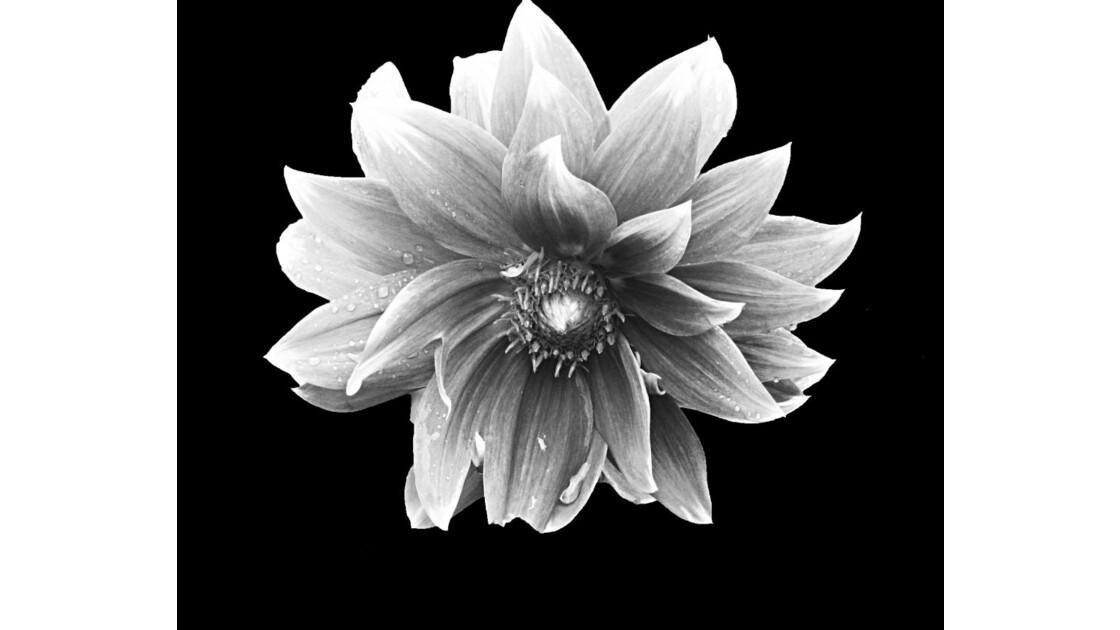 Une fleur qui pleure?