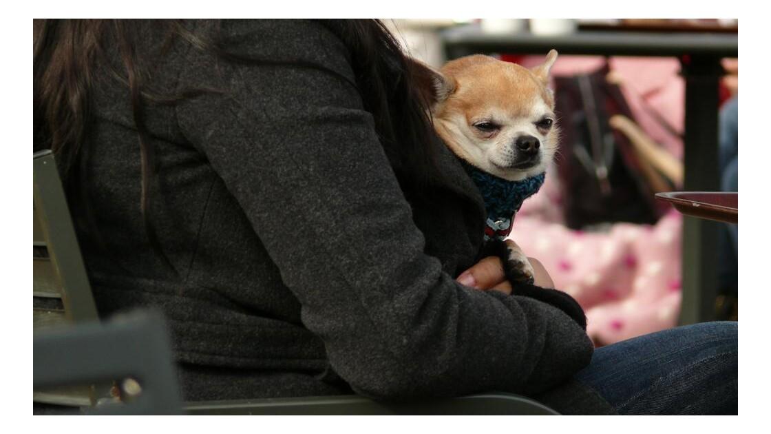 Londres - Un chien dans Hyde Park
