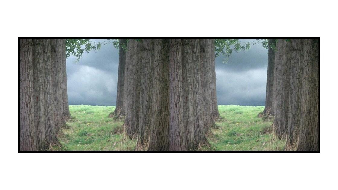 20/11/08 8h50 L'arbre qui cache la forêt