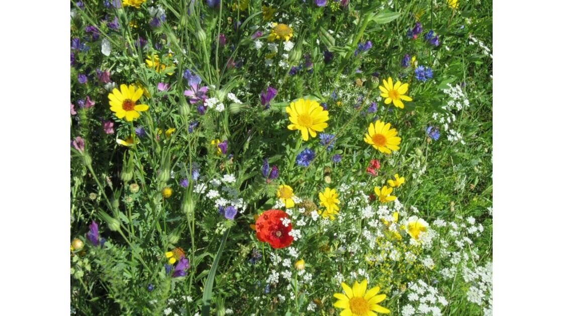 Quelques fleurs.....JPG