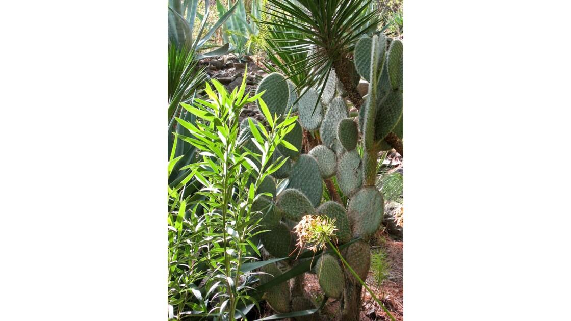 cactus Palmitos park (incendié)  oct 06