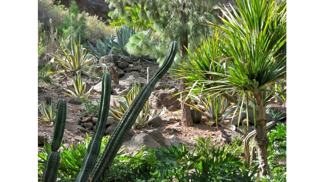 végétation Palmitos park (incendiée)