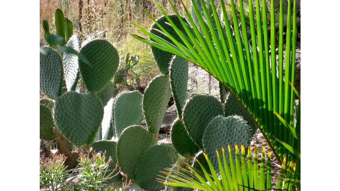 GRAN CANARIA - Palmitos park