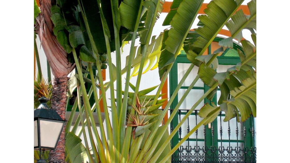fleurs_de_paradis_au_coeur_d_un_palmier