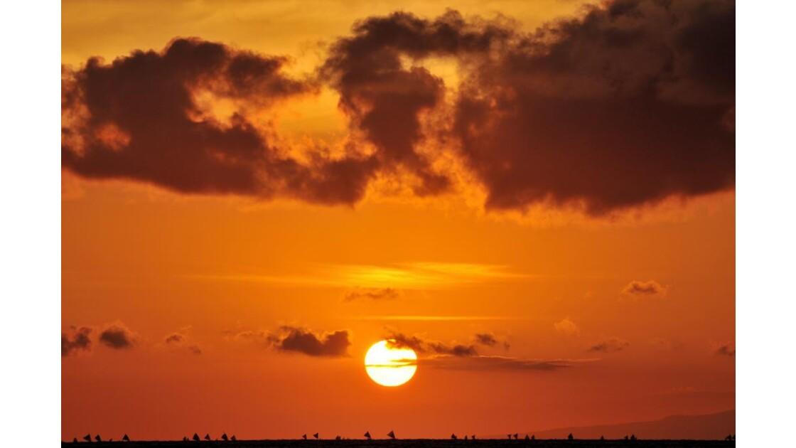 Sunrise Bunnutan