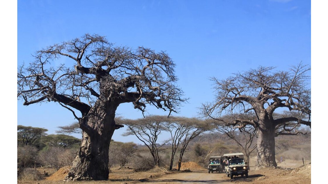 baobabs, Chobe