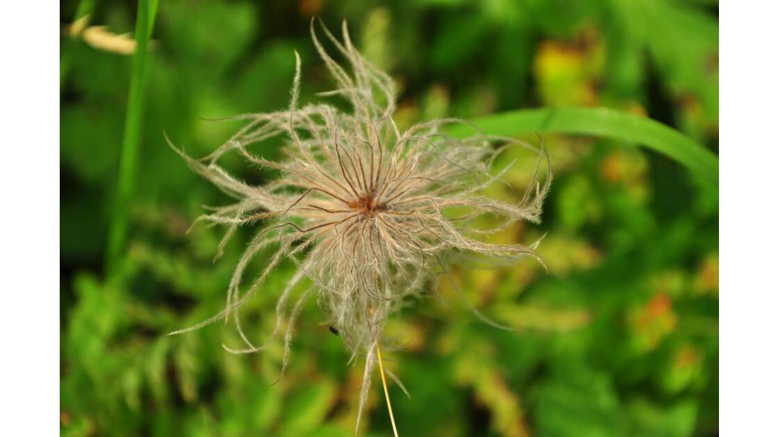 album flore du jura