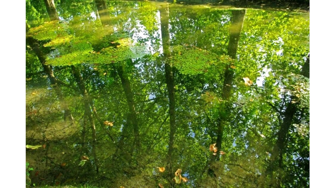 reflets profonds...