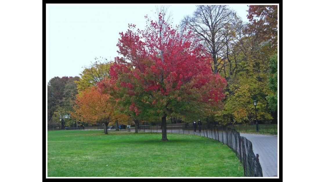 Bel arbre rouge Central Park NYC