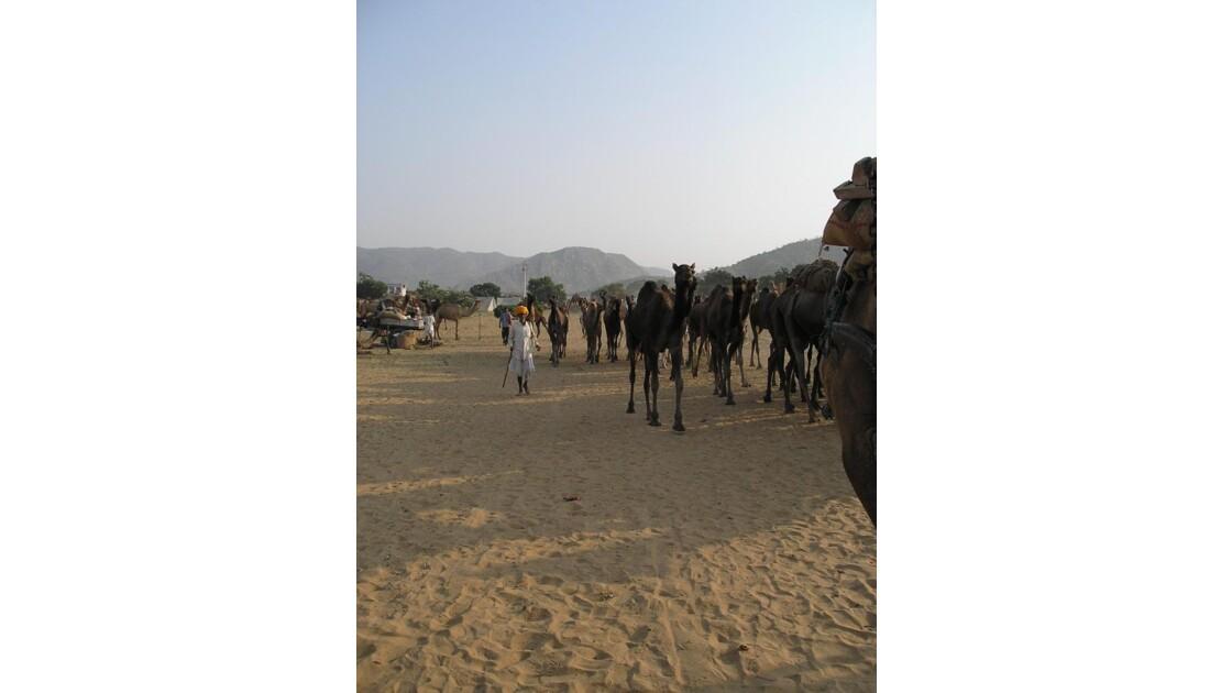Pushkar foire aux chameaux