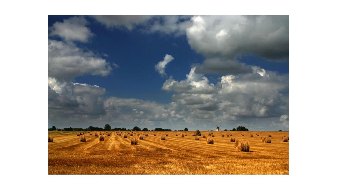Summer in the Fields