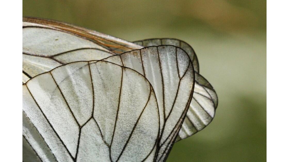 Détail des ailes