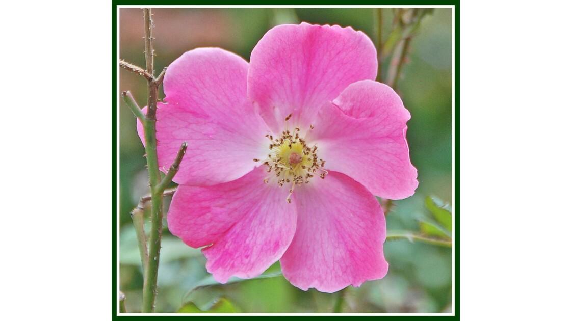 Fleur Central Park