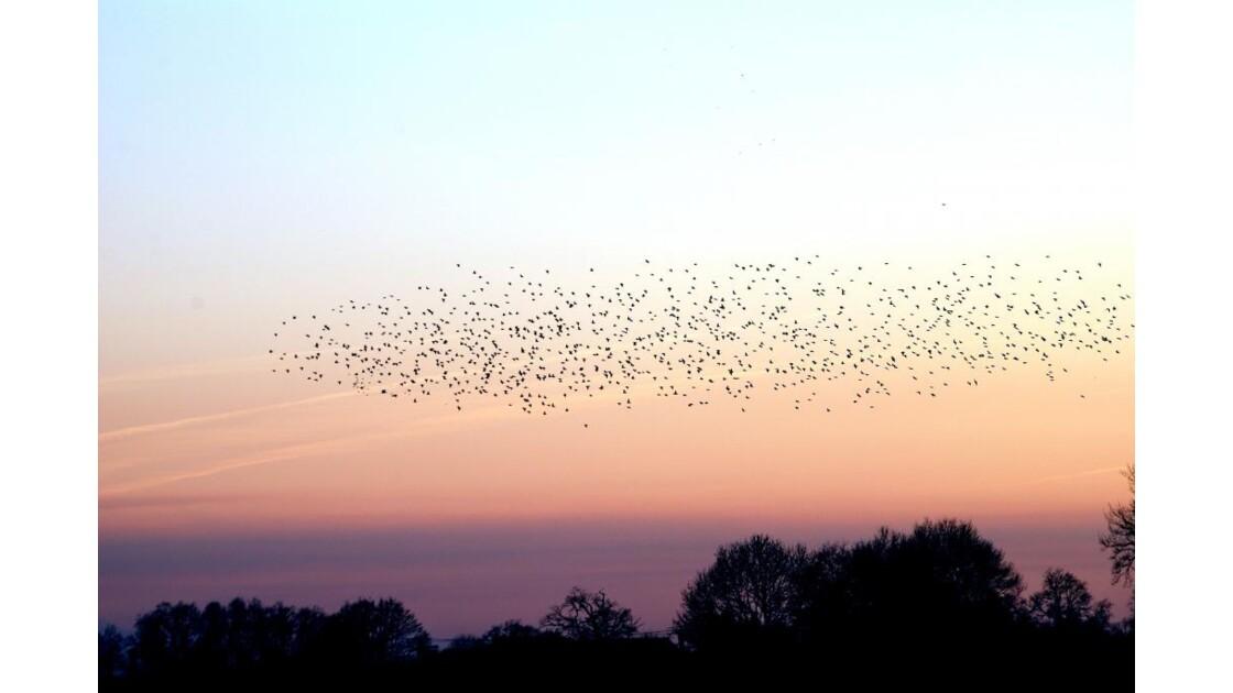 Vol de palombes