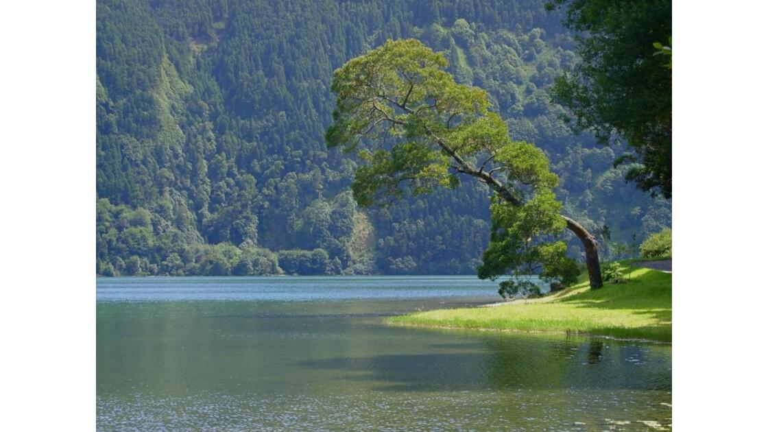 Lagoa Verde Acores Sao Miguel