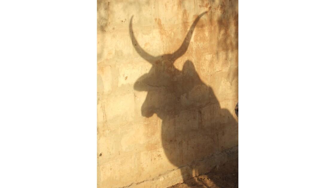 l'ombre de la vache.JPG