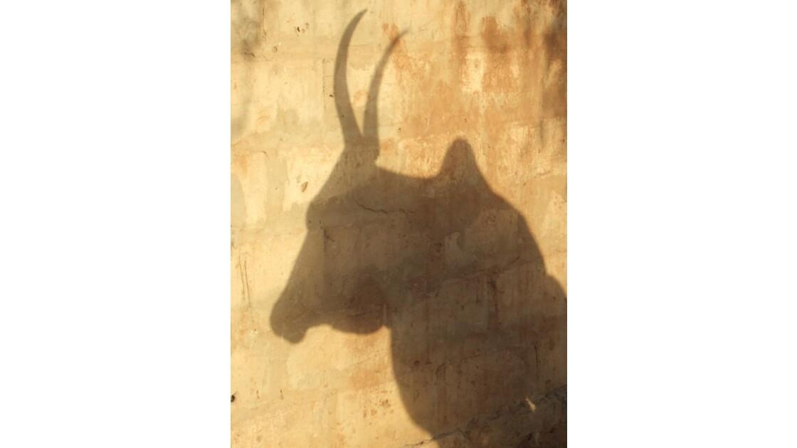 l'ombre de la vache'.JPG