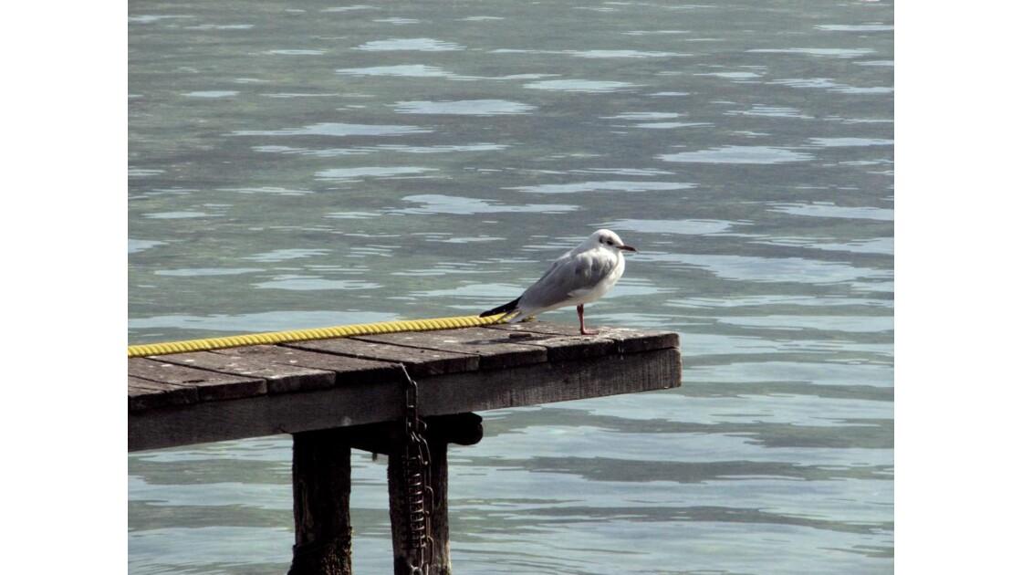 ANNECY  - Le Lac