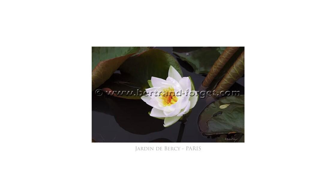 Le Nénuphar dans les jardins de Bercy