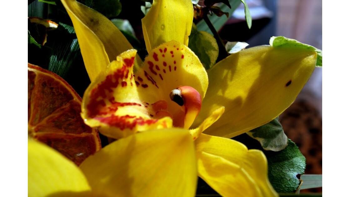 La chair de l'Orchidée 4