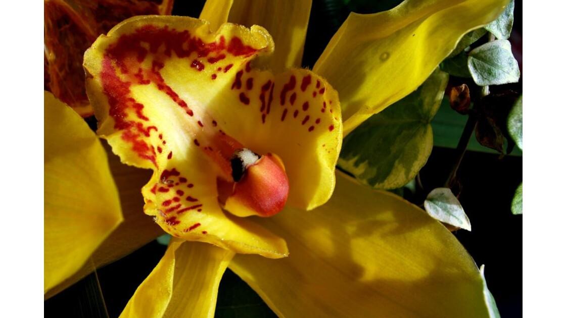 La chair de l'Orchidée 5