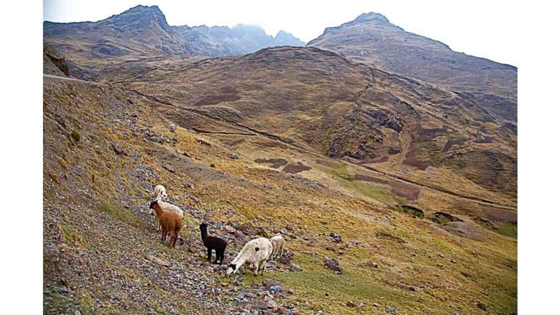 0068 la vallée de Larès