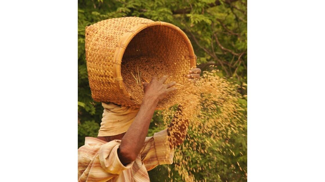 riz en pluie et pluie de riz